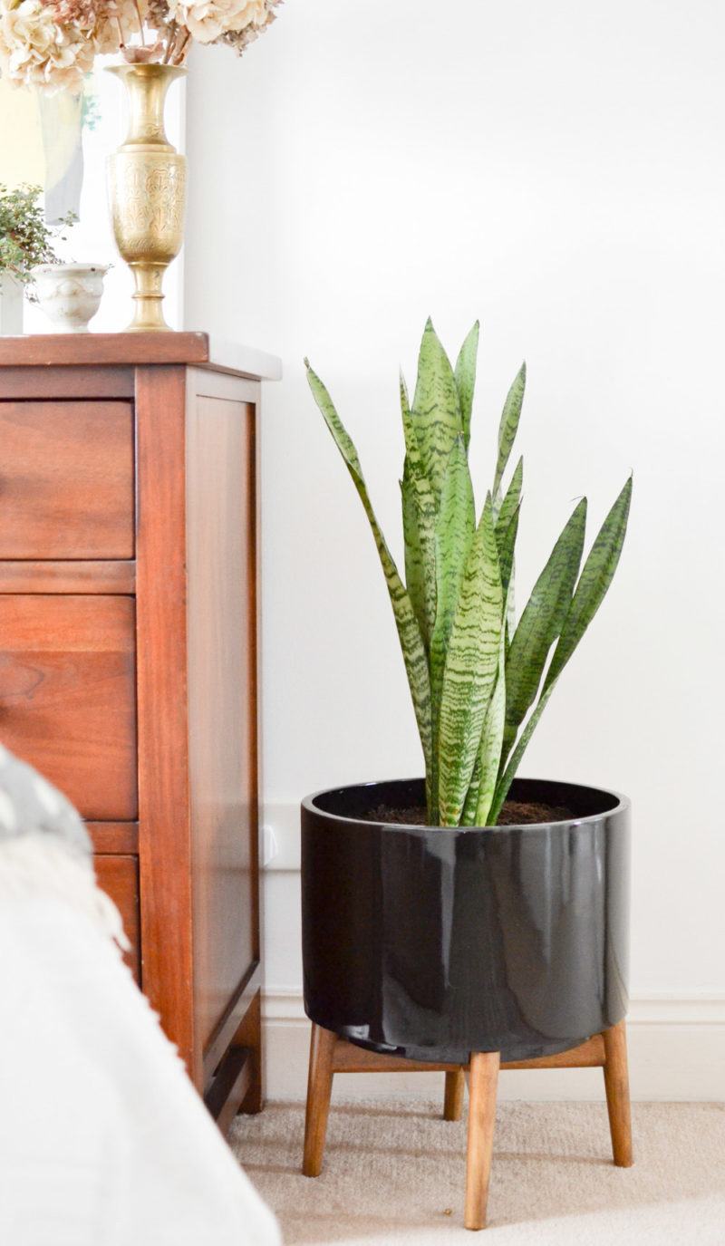 Midcentury LaRedoute Planter with Snake Plant