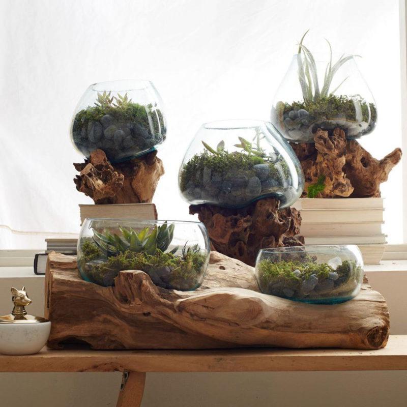 West Elm Wood Glass Terrariums